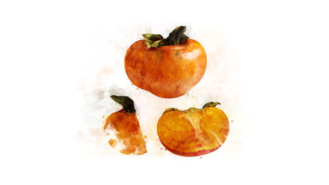Persimmon watercolor drawing animation Animation