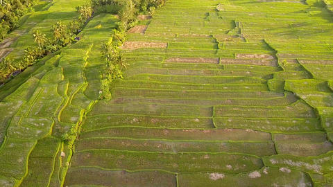 Beautiful Sunset at Rice Paddy Fields. 4K, Aerial. Bali, Indonesia Live Action