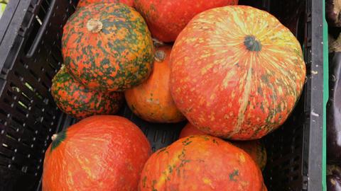 Ripple orange pumpkins in the supermarket. 4k footage. Closeup shot Footage