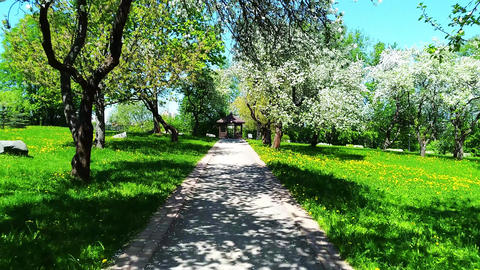 Walking in the apple blossoming garden Footage