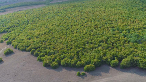 Aerial View of Forest Footage