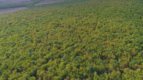 Aerial View of Forest Stock Video Footage