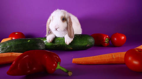 Bunny and vegetables. Rabbit with vegetable. Carrot,cucumber Footage