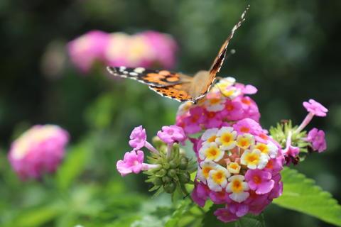 butterfly&flower Photo