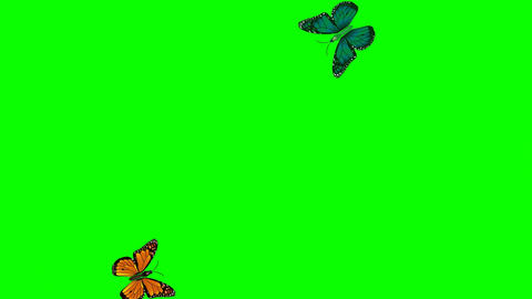 Lovely, colorful flying butterflies with green background Footage