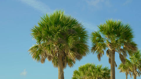 Palm trees against blue sky ビデオ