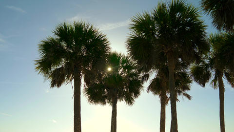 Silhouette coconut palm trees on beach at sunset ビデオ