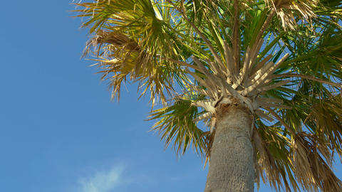 Palm trees against a beautiful blue sky ビデオ