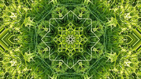 Green herbal kaleidoscope Animación