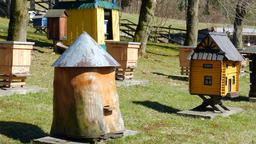 Bee garden. Old historic beehive and flying bees. Zoom in shot Live Action