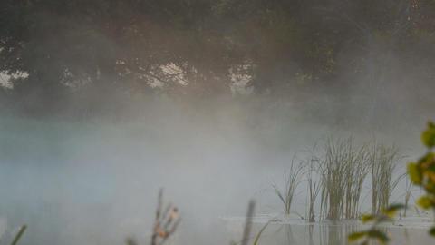 Morning fog on quiet lake Footage