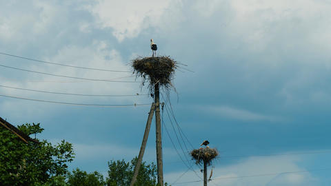 White storks in nests on power pillars in Armenian village agains stormy sky Footage