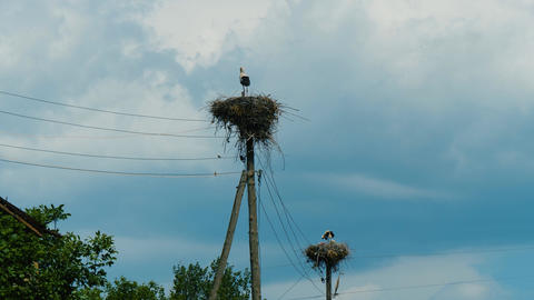 White storks in nests on power pillars in Armenian... Stock Video Footage