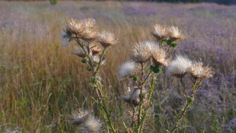 Wild meadow plants at sunset Live Action