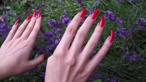 Long red polished Nails and Lavender flowers Footage