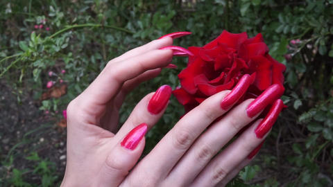 Long Red polished Nails and Red Rose Footage