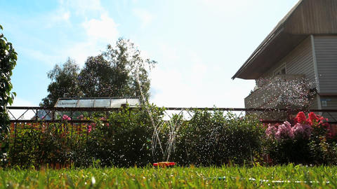 Garden lawn water sprinkler GIF