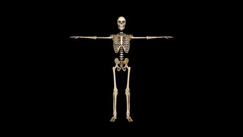 Skeleton Animación