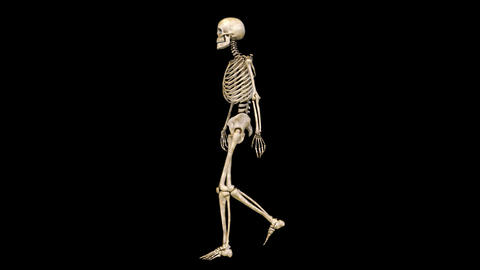 Skeleton Walk Animación