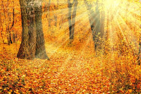 Yellow-red autumn Photo