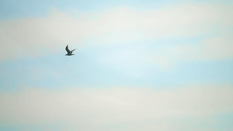 Slow motion shot of a sea gull flying in the sky GIF