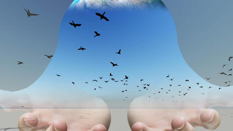 Mixed media of two 3d animation from Flock of birds flying across the screen and Animation