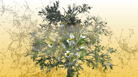 Mixed media of two 3d animation from tree and camomile flowers Animation