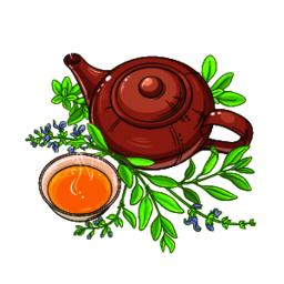 sage tea vector illustration Vector