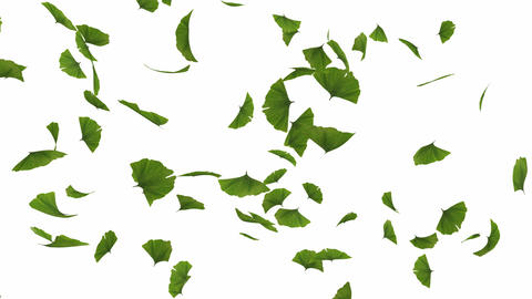 Falling gingko leaves Animation