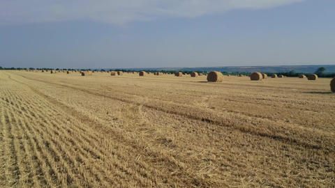 Horizontal panorama of haystacks on a sloping field. Harvesting in the Footage