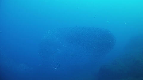 Bait balls of little fishes - Scuba divin in the Mediterranean sea Live Action