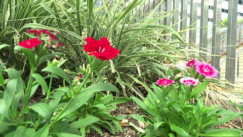 Flowers under the stairs Stock Video Footage