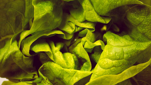 Close Up Of Lettuce Spinning In The Dark 영상물