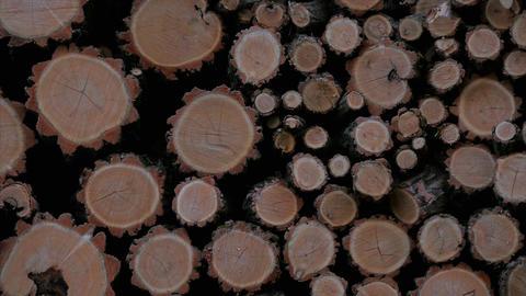 Forest logging site. Piles of log, logging Footage