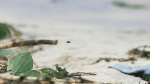 Flies on polluted coast, garbage on dirty sandy ocean shore, abandoned beach Footage