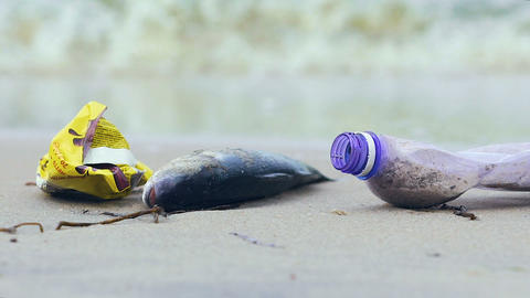 Dirty ocean shore with dead fish, waves picking up debris and litter, ecology Live Action