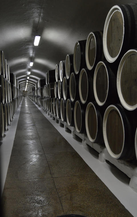 Oak barrels lie in rows in the wine cellar, storage and aging of wine フォト