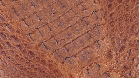 Rotation, natural crocodile skin, can be used as background and texture Footage