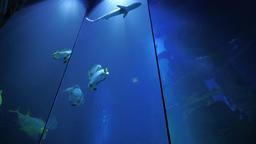 Giant Aquarium Terra Zoo Haus des Meeres in Vienna Austria Full HD Video Footage Footage