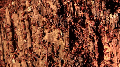 ants live in an old birch stump GIF