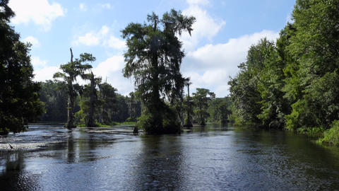 Forest And Forest At Edward Ball Wakulla Springs State Park Live Action