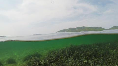 seaweeds underwater in Mugoni beach ビデオ