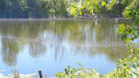 A small forest lake. The old quiet pond Footage