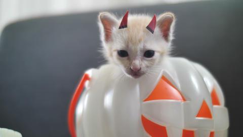 4K Cute tabby kitten hiding inside pumpkin bucket, Happy Halloween Footage