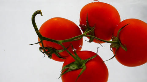 Fresh of tomatoes in water, slow motion close-up Footage