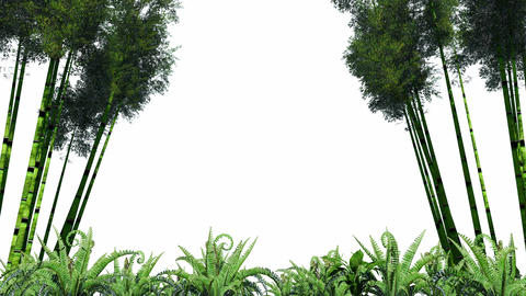 Bamboo Forest Overlay Animation