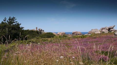 Ploumanach pink granite rocks. Bretagne France Footage