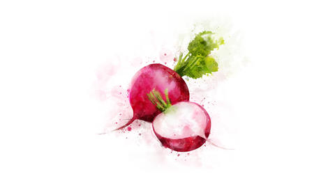 Radish for video decoration Animation