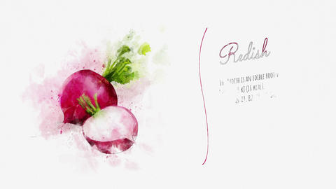 Information and description of Radish Stock Video Footage