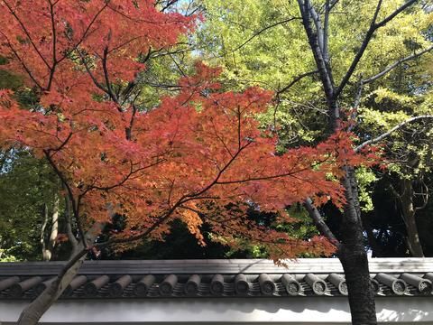 the beauty of autumn season and traditional Japanese architecture Photo